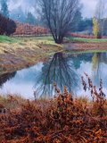Reflection at Autumn Vineyard, Calistoga Napa Valley Metal Print by Vincent James