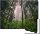 Back to the Trees, California Coastal Redwoods Prints by Vincent James