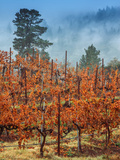 Misty Autumn Vineyard, Calistoga Napa Valley Metal Print by Vincent James