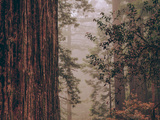 Redwood Forest Detail, California Coast Metal Print by Vincent James