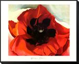 Poppy Lámina montada con marco por Georgia O'Keeffe