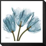 Tulips in Blue Framed Print Mount von Albert Koetsier