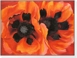 Oriental Poppies, 1928 Indrammet opspændt tryk af Georgia O'Keeffe