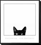 Nieuwsgierigheid, poster van kat met daarbij tekst: Curiosity Ingelijste kunst op hout van Jon Bertelli