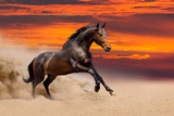 Beautiful Bay Horse Free Running Photographic Print by  Callipso88
