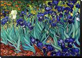Iris Framed Print Mount von Vincent van Gogh