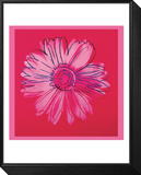 Daisy, c.1982  (crimson and pink) Framed Print Mount by Andy Warhol