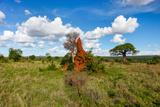 Termite Mount in Tarangire National Park, Tanzania Africa Photographic Print by BlueOrange Studio