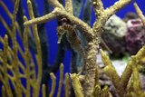 Seahorse Lámina fotográfica por Dan Schreiber