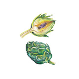 Watercolor Artichoke Set Art by  lenavetka87