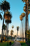 Los Angeles Downtown Park View with Palm Trees. Photographic Print by Songquan Deng