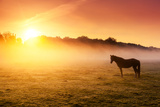 Arabian Horses Grazing on Pasture at Sundown in Orange Sunny Beams. Dramatic Foggy Scene. Carpathia Photographic Print by Leonid Tit