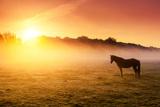 Arabian Horses Grazing on Pasture at Sundown in Orange Sunny Beams. Dramatic Foggy Scene. Carpathia Photographic Print by Leonid Tit