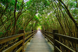 Mangrove Forest with Wood Walk Way Photographic Print by  richie0703
