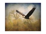 Monarch of the Skies Bald Eagle Giclée-Druck von Jai Johnson