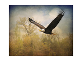 Monarch of the Skies Bald Eagle Giclee Print by Jai Johnson