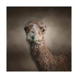 Eat Your Veggies Camel Giclee Print by Jai Johnson