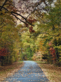 Autumn Passage 3 Photographic Print by Jai Johnson