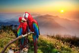 The Potrait of Blue & Gold Macaw Reproduction photographique par  NicholasHan
