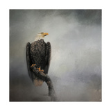 High Perch Bald Eagle Lámina giclée por Jai Johnson