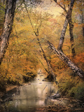 Autumn Riches 1 Photographic Print by Jai Johnson