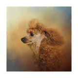 Enjoying the Breeze Apricot Poodle Giclee Print by Jai Johnson