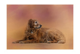 Golden Retriever in the Setting Sun Giclee Print by Jai Johnson