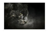 Out of the Shadows Black Leopard Giclee Print by Jai Johnson