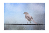 Mockingbird in the Snow Giclee Print by Jai Johnson