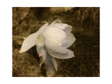 Cape Jasmine Gardenia 1 Giclee Print by Jai Johnson