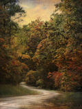 Autumn Forest 1 Photographic Print by Jai Johnson
