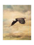 Early Evening Flight Bald Eagle 2 Giclee Print by Jai Johnson