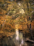Autumn Riches 2 Photographic Print by Jai Johnson
