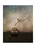 Black Capped Chickadee on a Vase Giclee Print by Jai Johnson