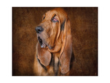 Bloodhound Portrait Giclee Print by Jai Johnson