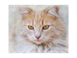 Orange Tabby Cat Portrait Giclee Print by Jai Johnson