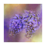 Enticing Wisteria Giclee Print by Jai Johnson