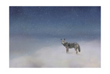 Coyote in Winter Giclee Print by Jai Johnson