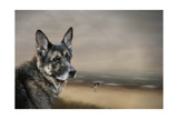 German Shepherd Dreaming of the Beach Giclee Print by Jai Johnson