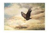 Early Evening Flight Bald Eagle 1 Giclee Print by Jai Johnson