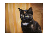 Jeweled Eyes Tortoiseshell Kitten Giclee Print by Jai Johnson