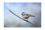 Chickadee in the Snow Reproduction procédé giclée par Jai Johnson