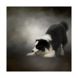 Ready to Play Border Collie Giclee Print by Jai Johnson