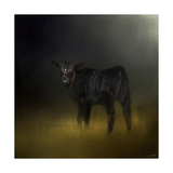 Black Angus Calf in the Moonlight Lámina giclée por Jai Johnson