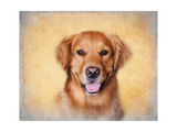 Young Golden Retriever Portrait Giclee Print by Jai Johnson