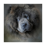 Watching Master Blue Chow Chow Giclee Print by Jai Johnson