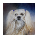 Handsome Lhasa Apso Giclee Print by Jai Johnson