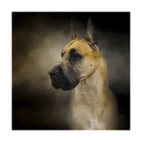 Dashing Great Dane Giclee Print by Jai Johnson