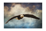 Coming Home Bald Eagle Giclee Print by Jai Johnson