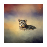 Yorkie Loving the Leaves Giclee Print by Jai Johnson